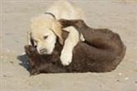 Honden - Hotel Goes
