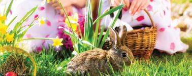 Hotel Den Haag - Nootdorp - Easter Package