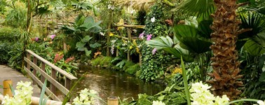 Hotel Emmeloord - Orchid farm package