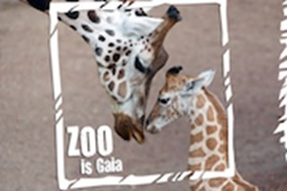 <strong>GaiaZOO</strong>