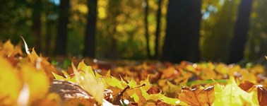 Hotel Almere - Awesome Autumn 3-day package