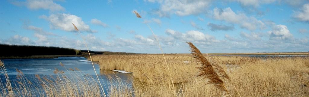Discover the beautiful surroundings of Almere!