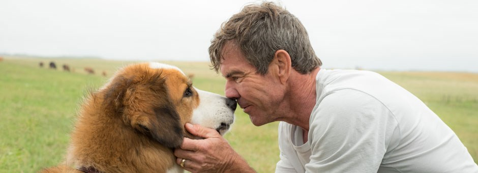 A dog's purpose - Bioscoop Diner