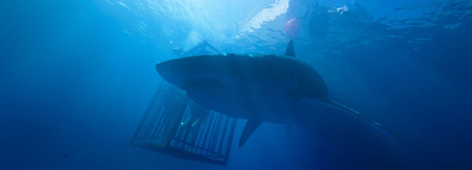 45 Meters Down - Bioscoop Diner